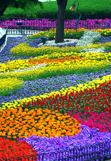 Eveland-Flower-garden-Everland-South-Korea-s-best-theme-park-four-seasons-garde-By-floridapfe-wallpaper-wp4406763