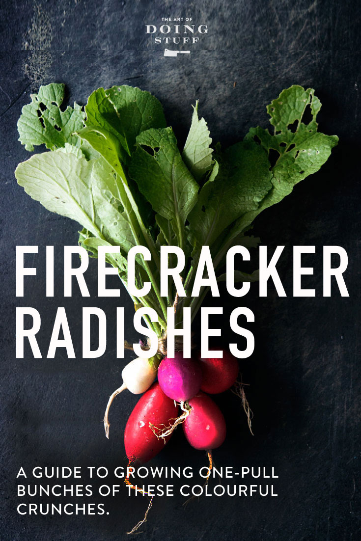 Every-bite-I-take-of-a-radish-today-brings-me-back-to-the-kitchen-table-in-the-house-I-grew-up-in-Â-wallpaper-wp3405281