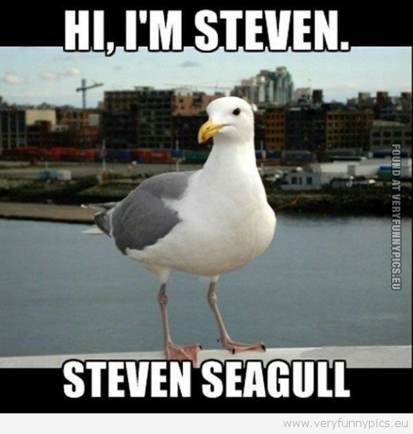 Extremely-Funny-One-Liners-Funny-Pictures-clever-animals-Thats-Steven-wallpaper-wp5007214