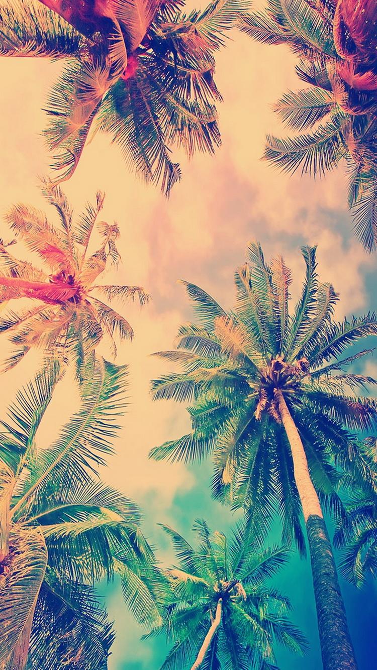 False-Color-Coconut-Trees-iPhone-iPod-HD-Free-Download-wallpaper-wp5805537