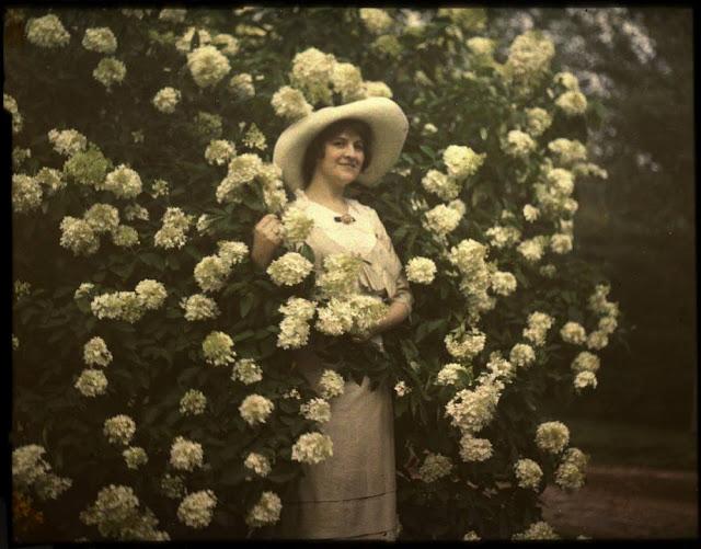Felix-Nadar-Room-Autochrome-Lumiere-an-Edwardian-lady-amongst-her-roses-sublime-wallpaper-wp425385-1