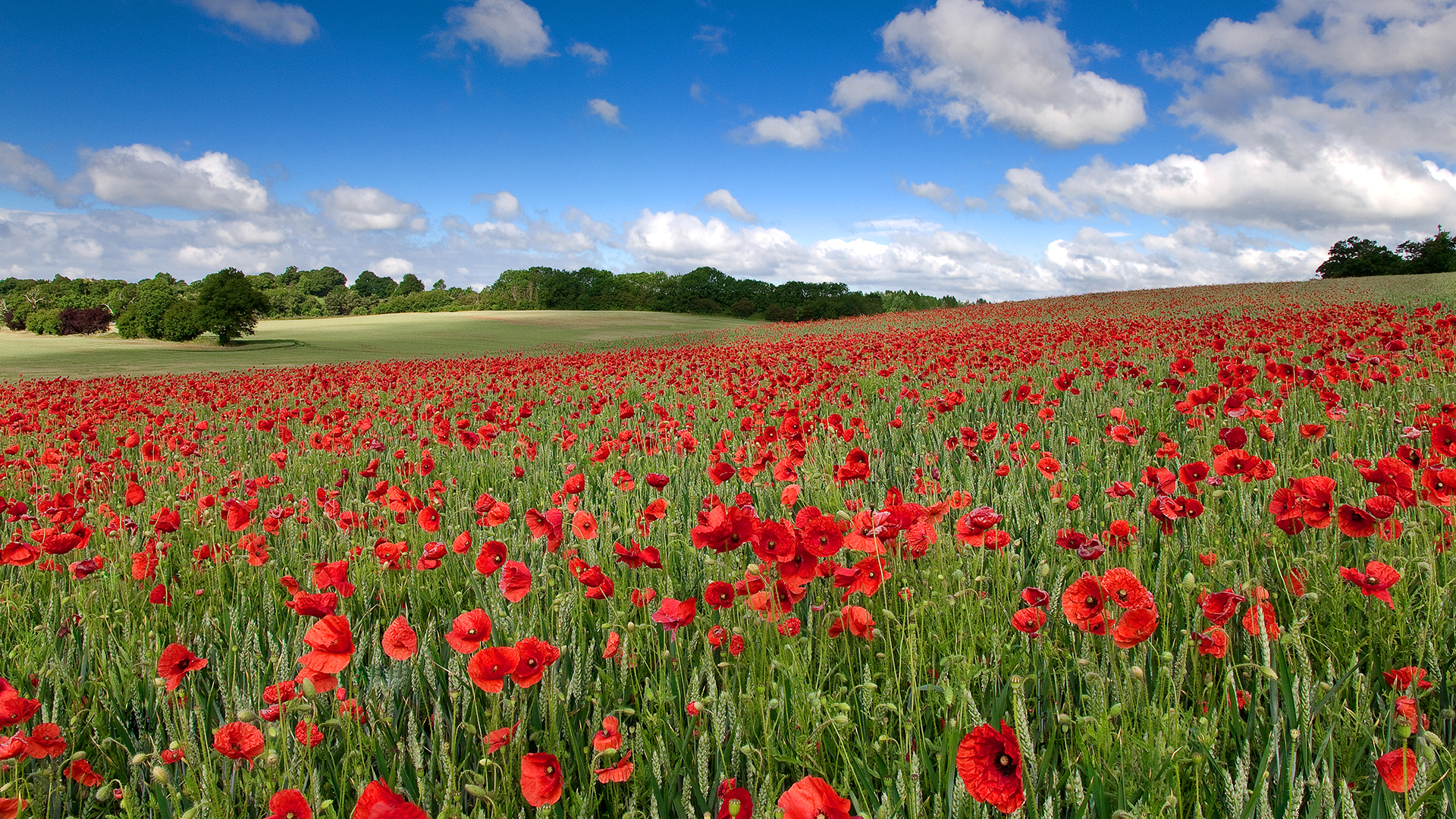 Field-of-remembrance-HD-wallpaper-wp5805633
