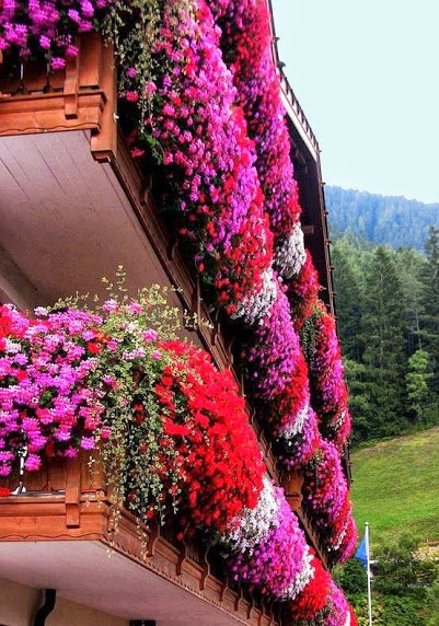 Flower-Balconies-South-Tyrol-Italy-wallpaper-wp3005741