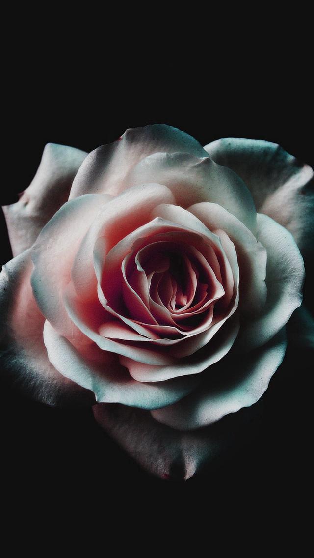 Flower-White-Dark-Red-Green-Minimal-Nature-iPhone-s-wallpaper-wp425479