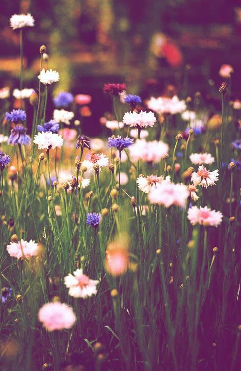 Flowers-wallpaper-wp425484