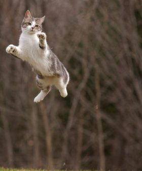 Flying cats! wallpaper