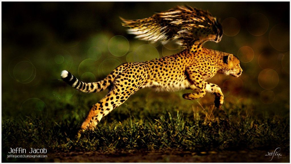 Flying-Jaguar-flying-jaguar-1080p-flying-jaguar-desktop-flying-jag-wallpaper-wp3605679