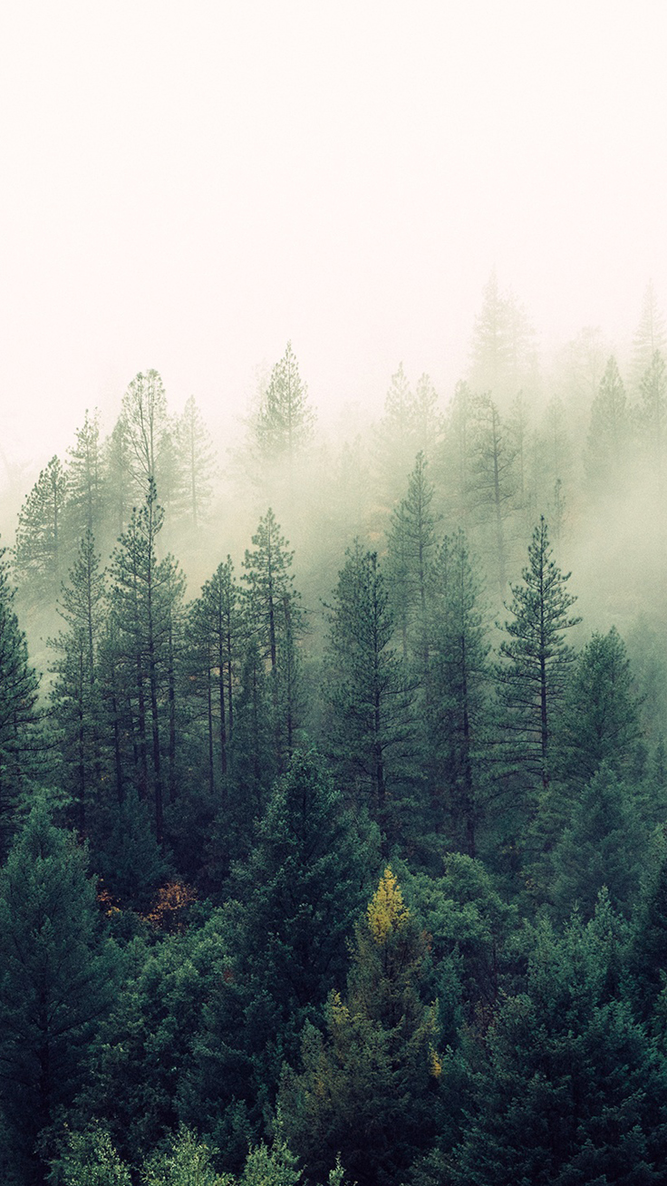 Foggy-Forest-Download-more-Nature-Inspired-iPhone-at-www-preppy-com-and-follo-wallpaper-wp3005772