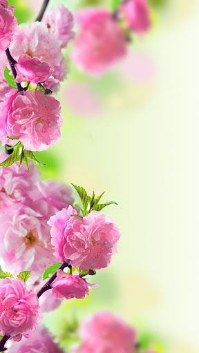 For-those-who-love-flowers-this-application-will-bring-you-amazing-nature-landscape-with-colorful-f-wallpaper-wp3405715