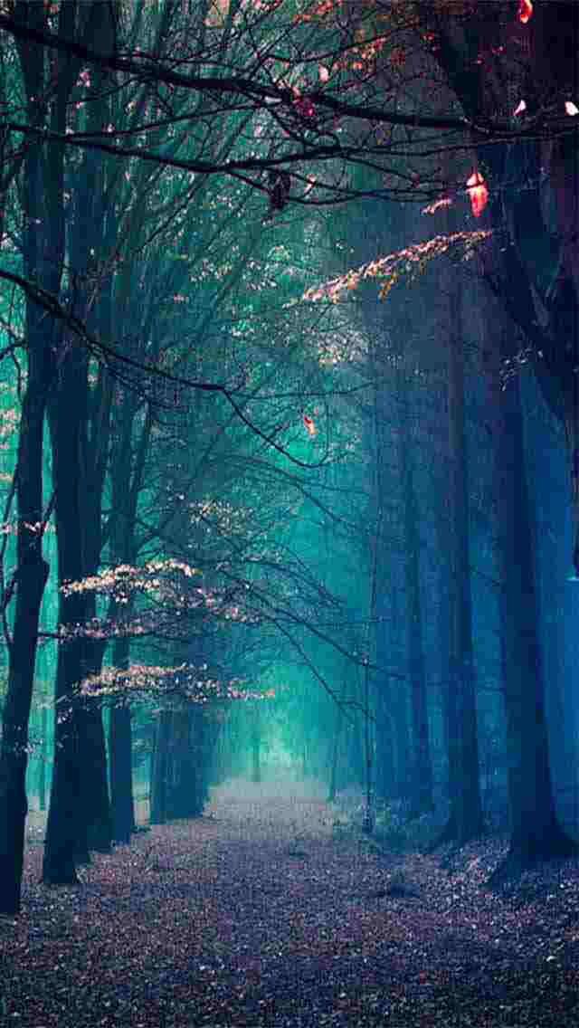 Forest-wallpaper-wp425521