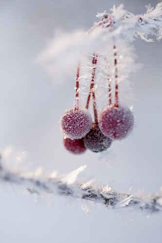 Frozen-berries-wallpaper-wp5007812