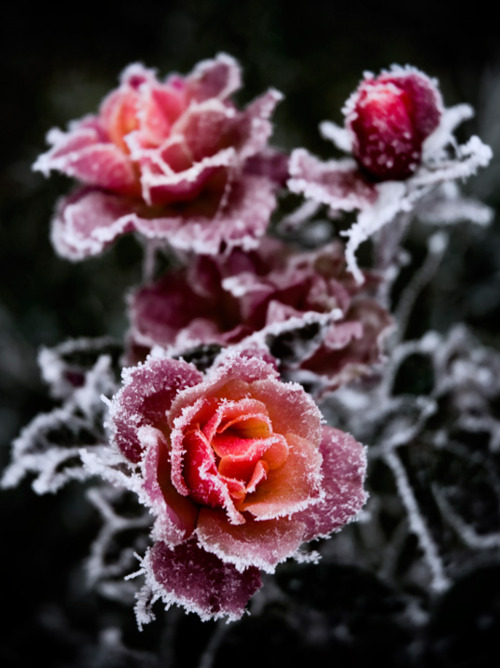 Frozen-wallpaper-wp5007814