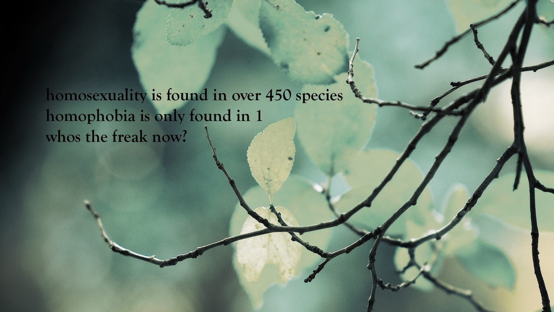 Funny-minimalistic-nature-quotes-text-1920x1080-minimalistic-nature-quotes-text-via-www-allwa-wallpaper-wp3406061