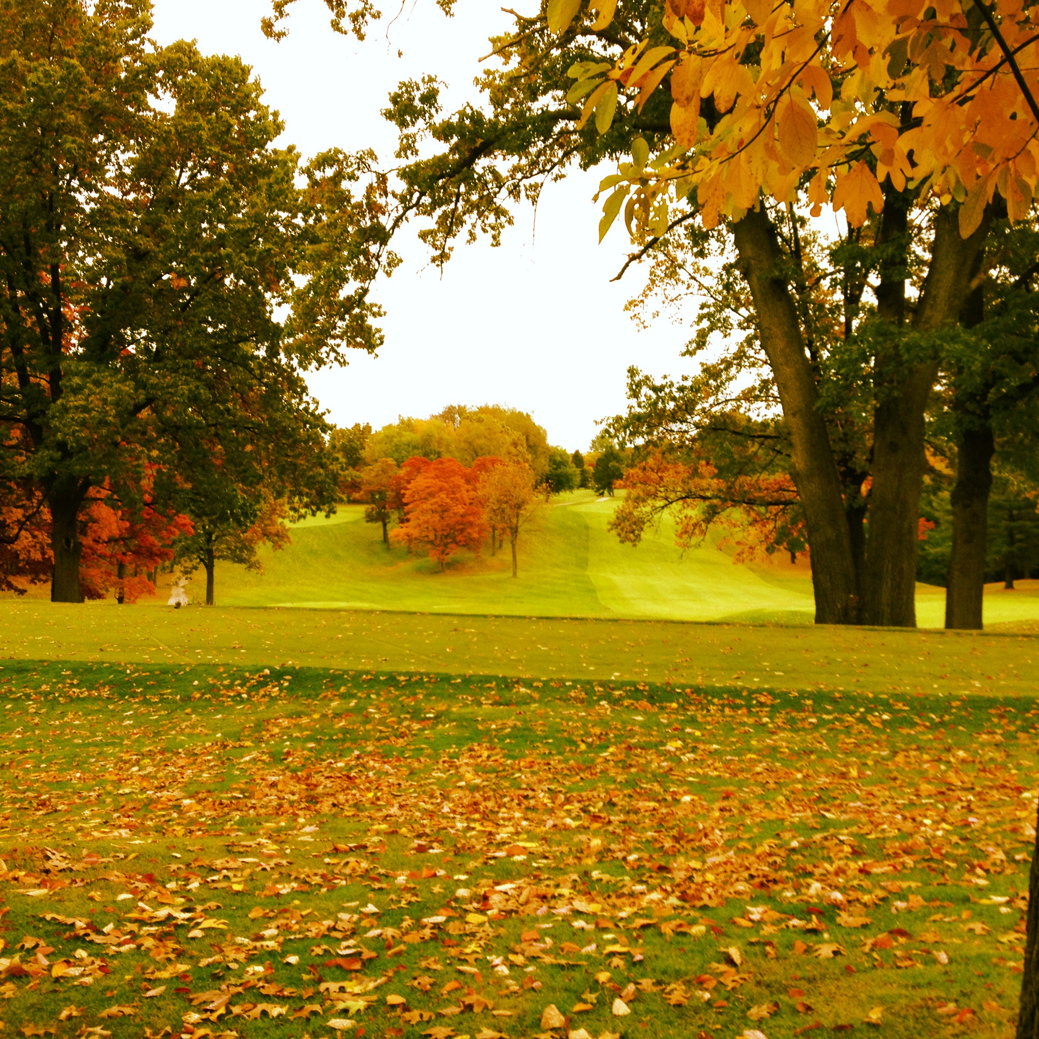 Golf-in-the-fall-wallpaper-wp425772