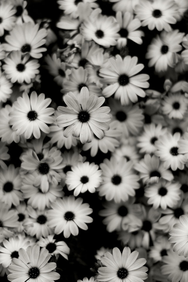 Google-Image-Result-for-http-iphone-com-iphone-main-black-and-whit-wallpaper-wp4606317