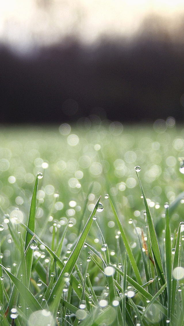 Grass-water-drop-iPhone-s-Wallpaper-Welcome-to-pick-out-the-favorite-as-your-iPhone-wallpaper-wallpaper-wp4806945