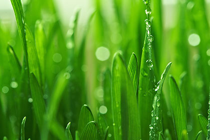 Grassy-Dew-wallpaper-wp5405375