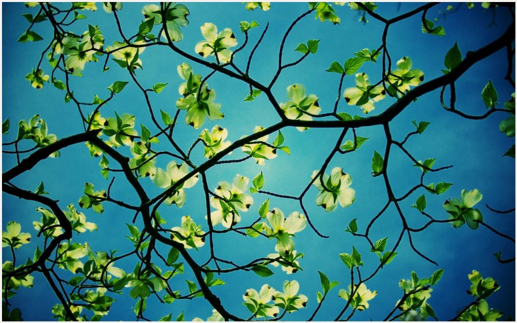 Green-Flowers-Tree-Branches-green-flowers-tree-branches-desktop-green-flowers-tree-bran-wallpaper-wp3606381