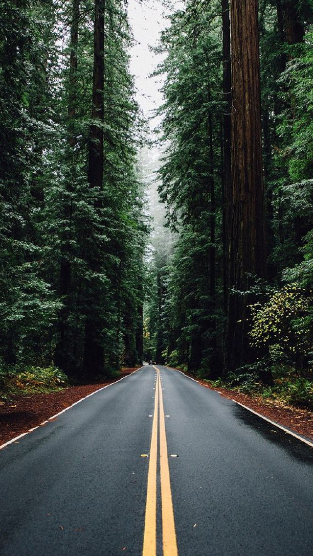 Green-Forest-Road-Tall-Trees-iPhone-Wallpaper-wallpaper-wp4806980