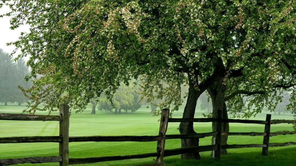Greenery-And-Blossomed-Tree-wallpaper-wp5405417