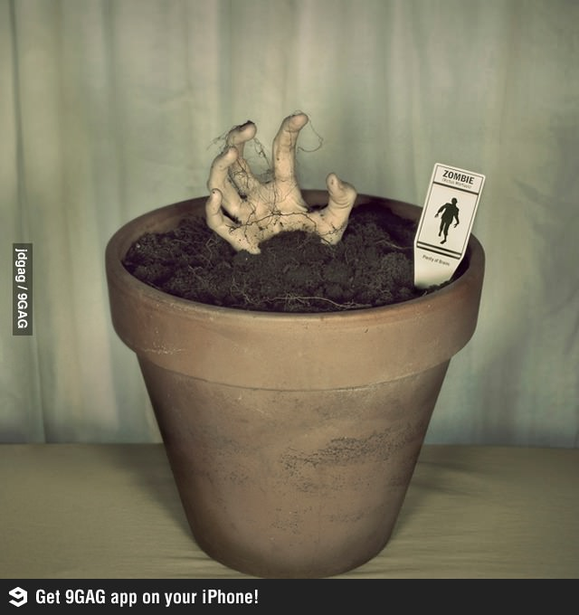 Grow-your-own-zombie-decor-wallpaper-wp5806192