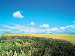 HD-1080p-high-resolution-hd-nature-wallpaper-wp3406742