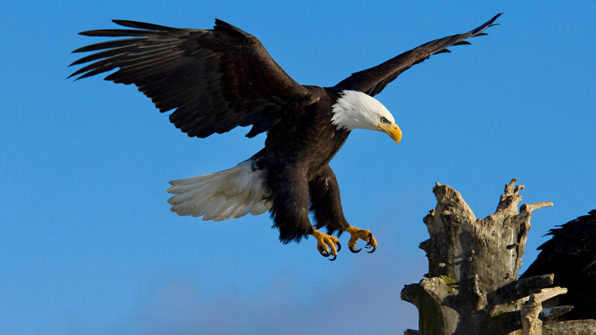 HD-eagle-pictures-ile-ilgili-görsel-sonucu-wallpaper-wp5601152