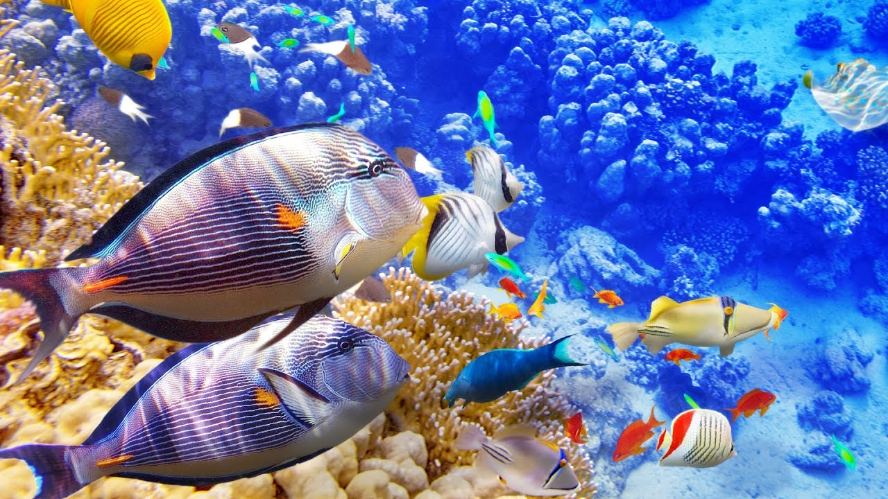 HOURS-of-Beautiful-Coral-Reef-Fish-Relaxing-Ocean-Fish-The-Best-Relax-Music-1080p-HD-wallpaper-wp3401246