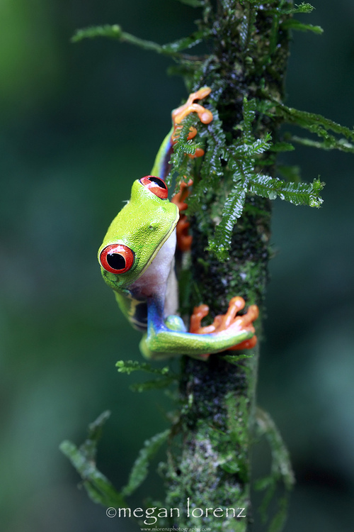 Hang-In-There-by-Megan-Lorenz-wallpaper-wp5008302