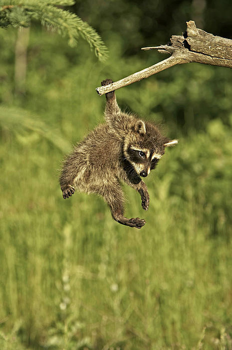 Hanging-Out-By-Jack-Milchanowski-wallpaper-wp5008320