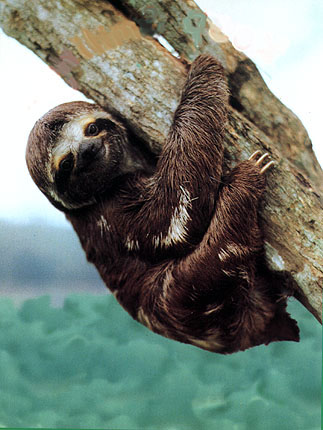 I-have-this-inexplicable-love-for-sloths-and-slugs-wallpaper-wp426329