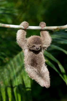 I-love-sloths-This-moment-of-delight-was-brought-to-you-by-GEICO-Click-on-the-image-to-get-a-free-wallpaper-wp426347