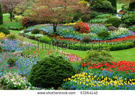 Image-detail-for-Beautiful-Flower-Pattern-In-Spring-Garden-Victoria-British-Columbia-wallpaper-wp4408313