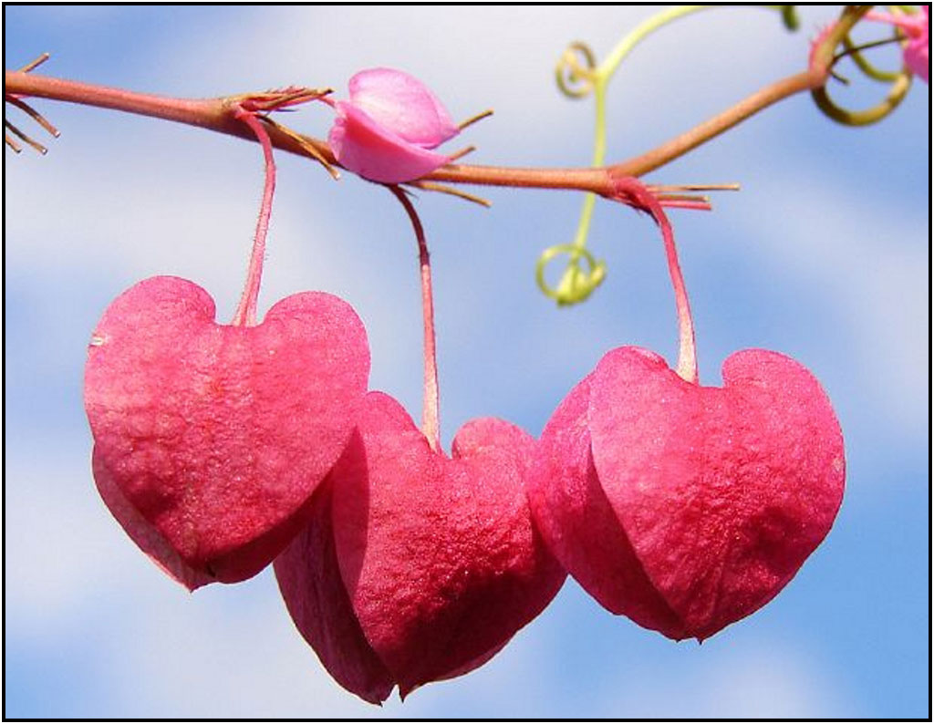 Image-detail-for-Beautiful-Valentines-Day-funny-valentine-s-day-wallpaper-wp5406101