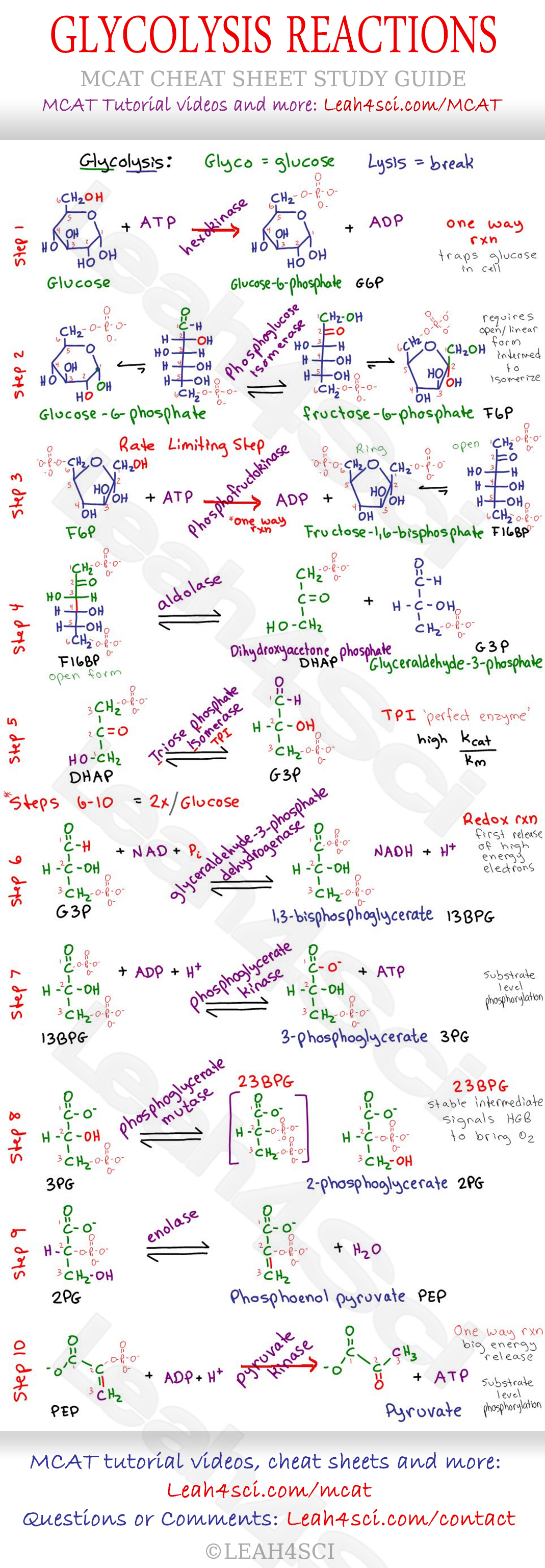 Image-from-http-leahsci-com-wp-content-uploads-Glycolysis-Reaction-Steps-MCAT-Cheat-Sheet-wallpaper-wp5406113