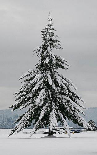 Laden-Tree-in-Winter-by-Audentes-via-Flickr-wallpaper-wp4607654