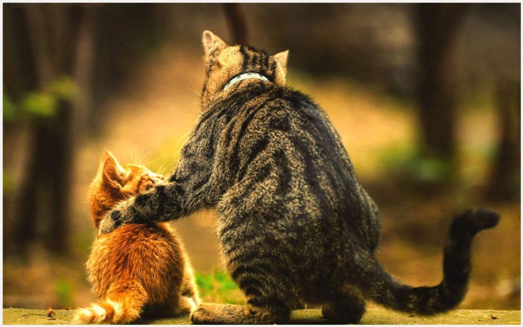 Mom-Cat-And-Baby-Cat-Cute-mom-cat-and-baby-cat-cute-1080p-mom-cat-and-baby-ca-wallpaper-wp340298
