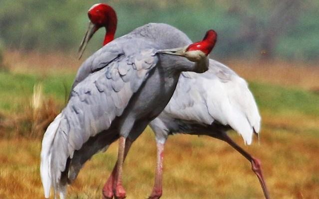 Most-Beautiful-Birds-Images-HD-Free-Desktop-Ba-wallpaper-wp5803123
