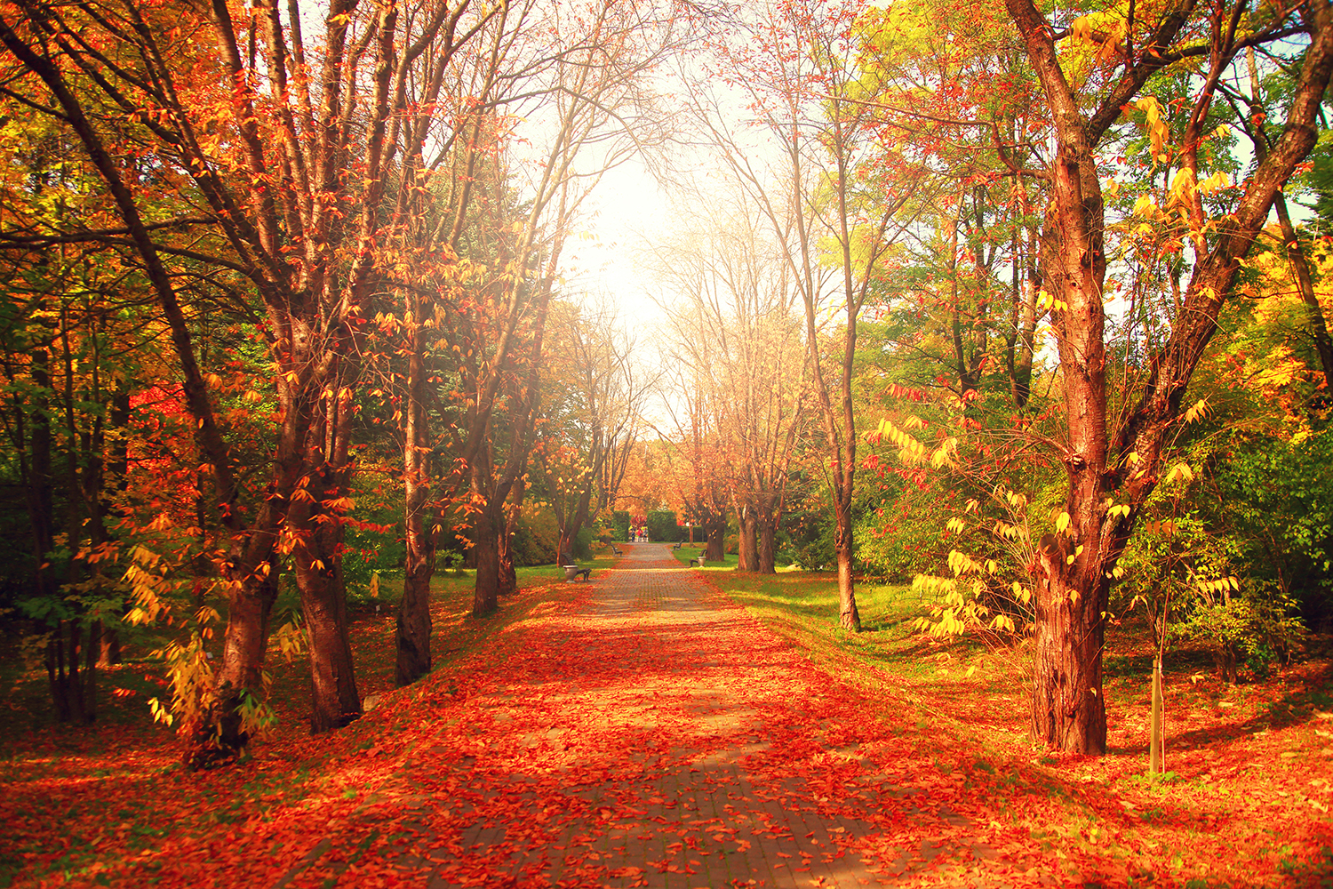 Order-Autumn-Park-Pathway-to-create-fantastic-wall-decor-in-your-living-space-or-browse-th-wallpaper-wp5407624