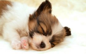 PUPPY PHOTOS wallpaper
