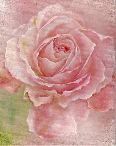Pink-rose-by-Annette-Stevenson-wallpaper-wp4006857