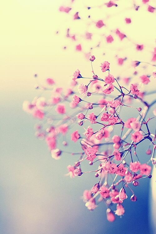 Pretty-in-Pink-Pink-Flowers-Pink-blossoms-Vintage-photography-Wispy-Flowers-Floral-Magic-Girly-wallpaper-wp428552