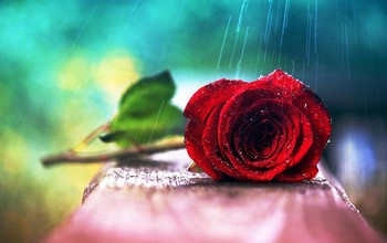 Water-Drops-Red-Roses-Wet-wallpaper-wp50013898