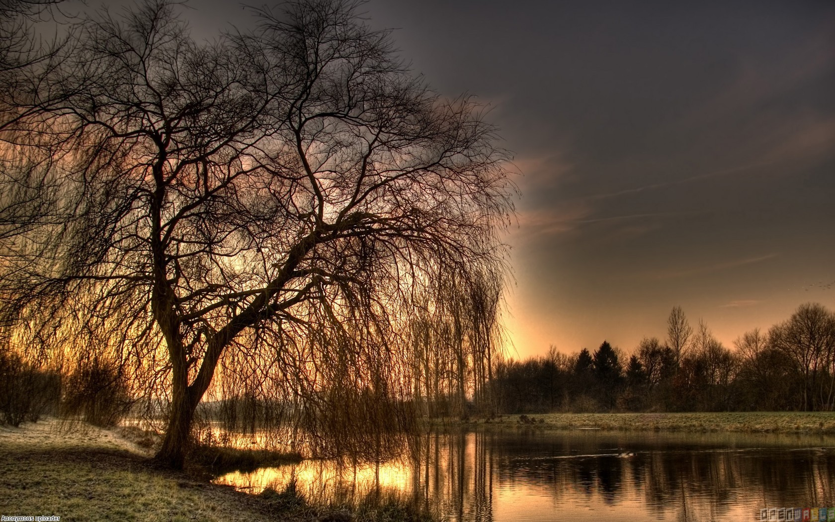 Weeping-Willow-wallpaper-wp540520