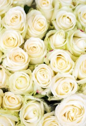 Beautiful Colour Roses wallpaper