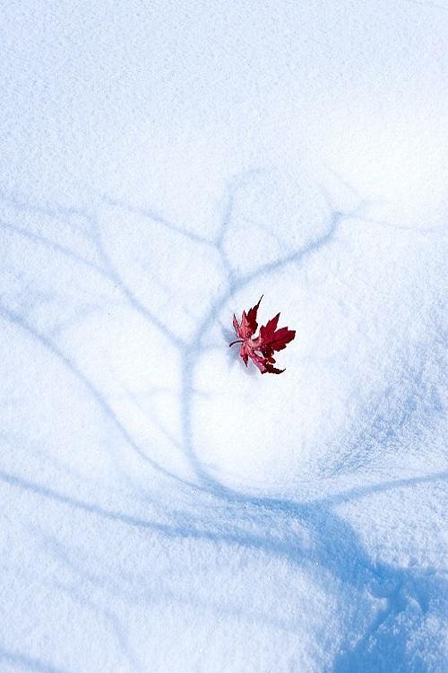 Winter-Wonder-wallpaper-wp5004073