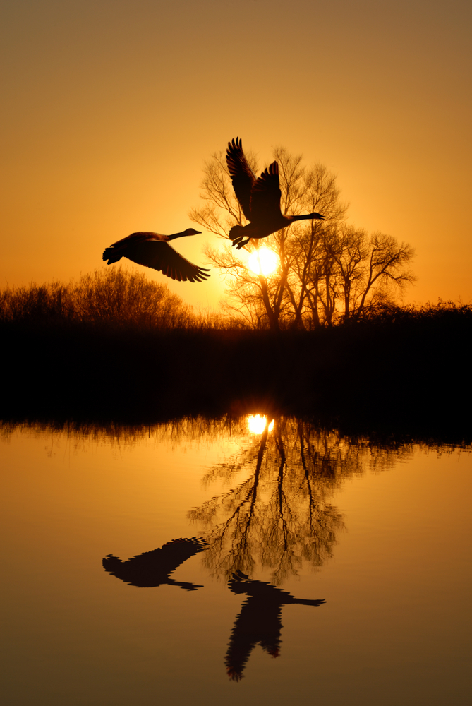 ababebbdeaac-silhouettes-beautiful-sunset-wallpaper-wp4404025