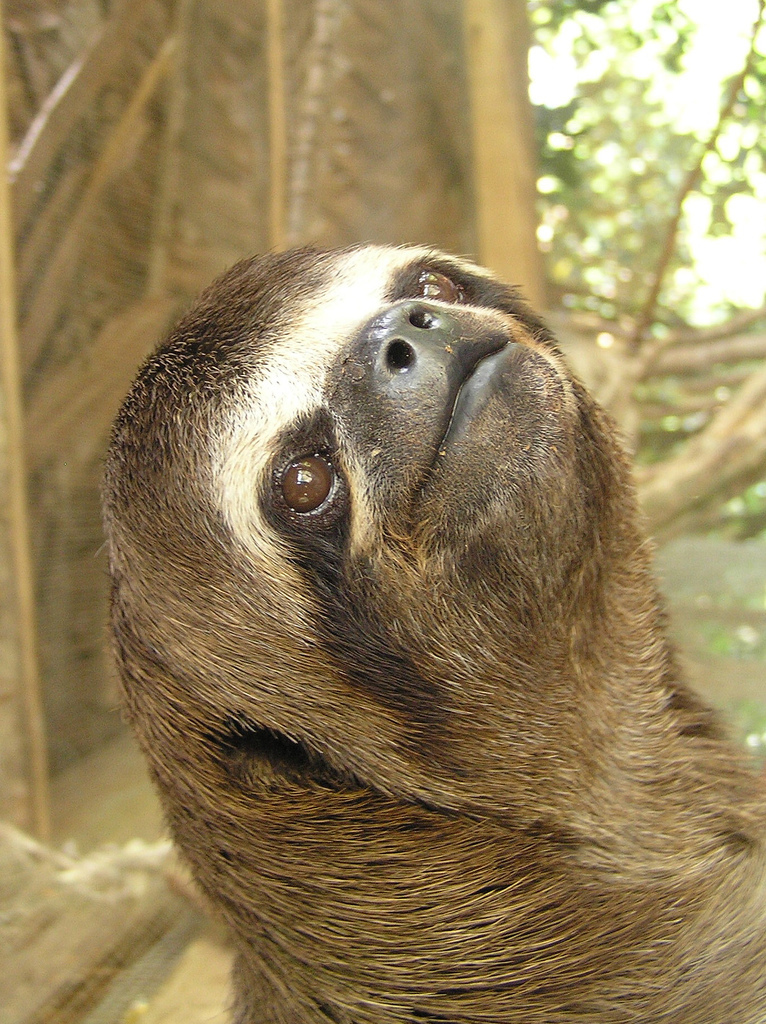 b-Few-creatures-enjoy-life-as-much-as-the-sloth-so-who-better-to-get-advice-from-b-That-s-righ-wallpaper-wp423176