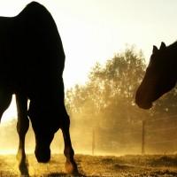 backlit-horses-duesseldorf-germany-x-wallpaper-wp5204372