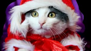 Gato do Natal papel de parede